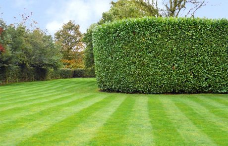 grass and hedge cutting in Alvechurch